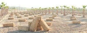 Gran recogida de alimentos en el Huerto Social Alicante en AIRE LIBRE