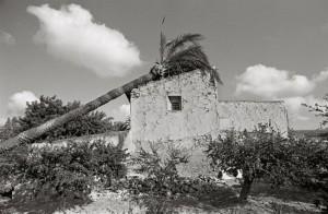 'Mutaciones', exposición fotográfica de José Ortuño en L'Escorxador en FOTOGRAFIA