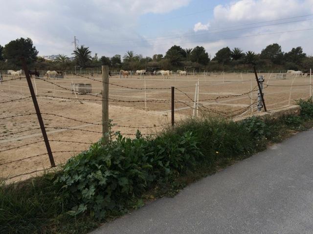 Refugio de caballos lanza una campaña urgente de recaudación de fondos en MEDIO AMBIENTE