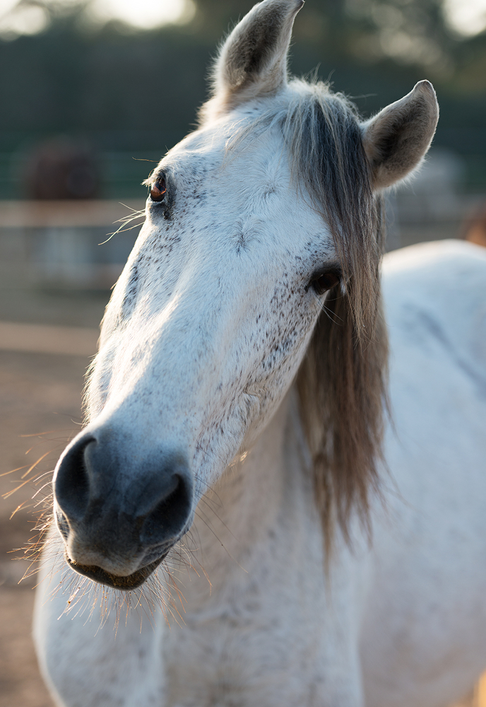 Arte solidario con caballos abandonados en PINTURA