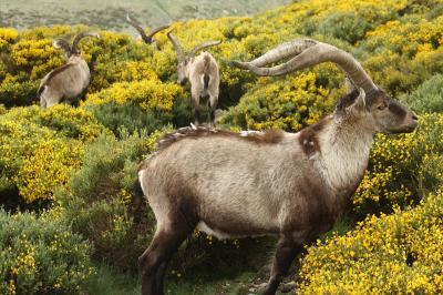 Guía de turismo rural para asistir a la floración primaveral en MEDIO AMBIENTE