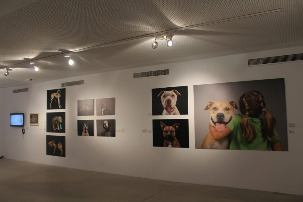 Más de 300 obras defienden los derechos de los animales en Las Cigarreras en ARTE