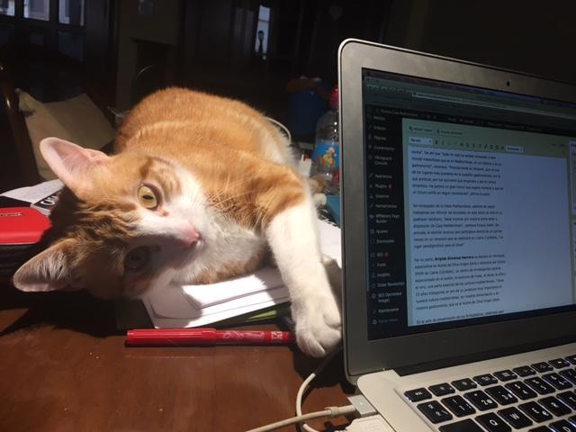 Día Internacional del Gato: trabajar con mininos incrementa la productividad y reduce el estrés en ESTILO DE VIDA