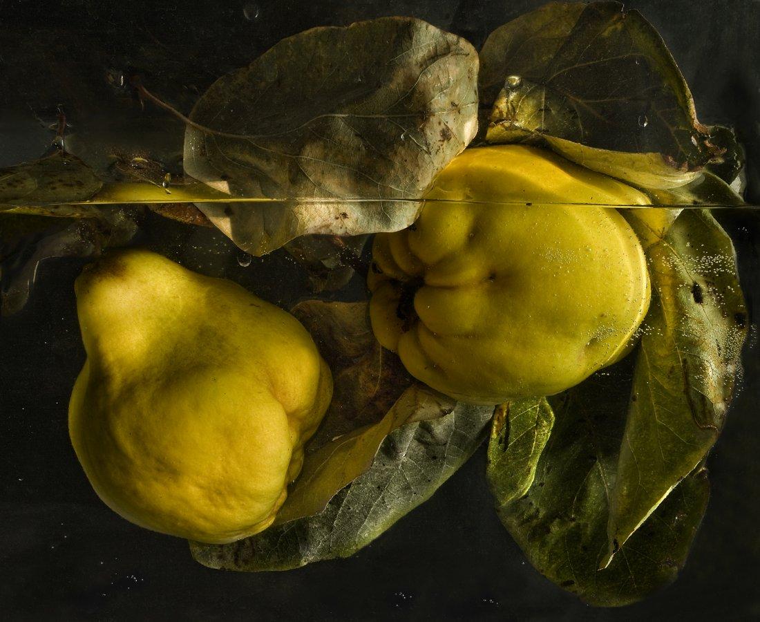 La flora mediterránea de Pilar Pequeño se sumerge en Casa Mediterráneo en DESTACADOS FOTOGRAFIA